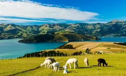 新西兰总理宣布将限制海外投资者购房
